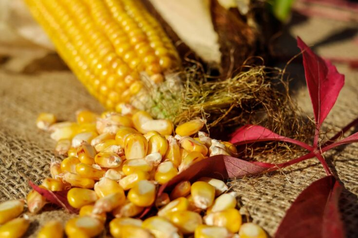 How to microwave corn on the cob to make popcorn