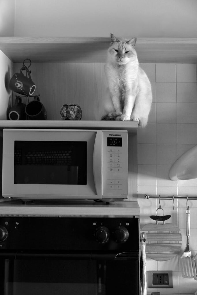 How to use a microwave safely